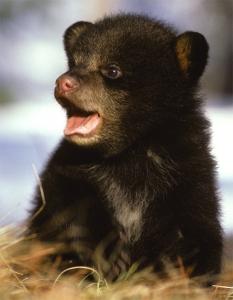 cute_cub