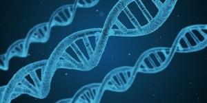 genetic memory